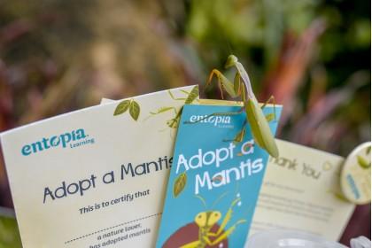 Adopt A Mantis