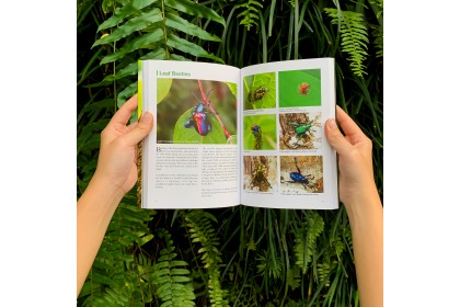 Book - Insects of Malaysia