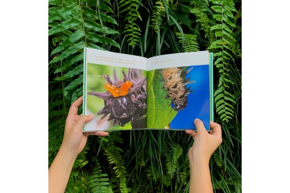 Book - Diary of A Yellow Birdwing Butterfly